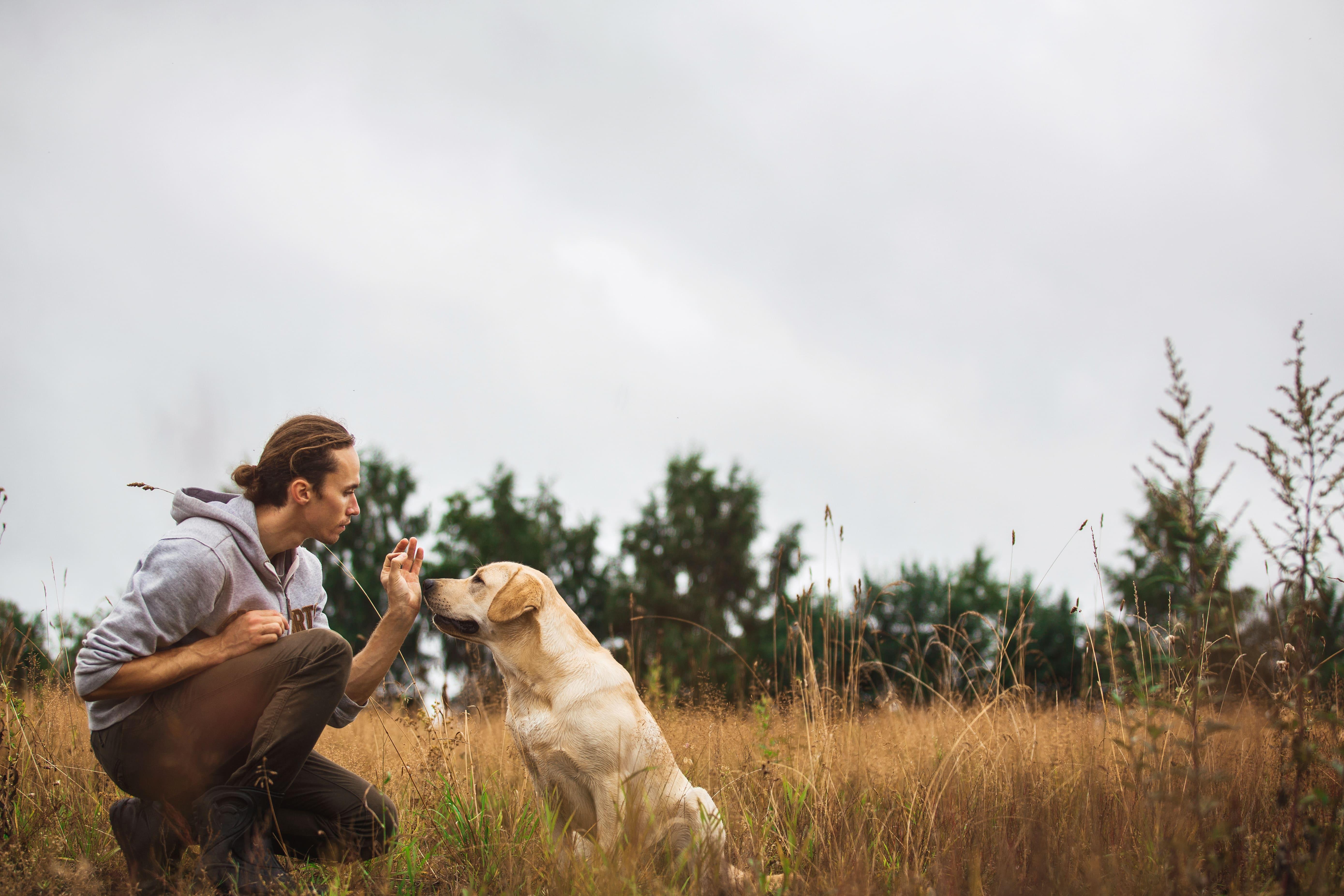 L'éducation positive : de quoi parlons-nous ? Comment la pratiquer avec mon chien ?