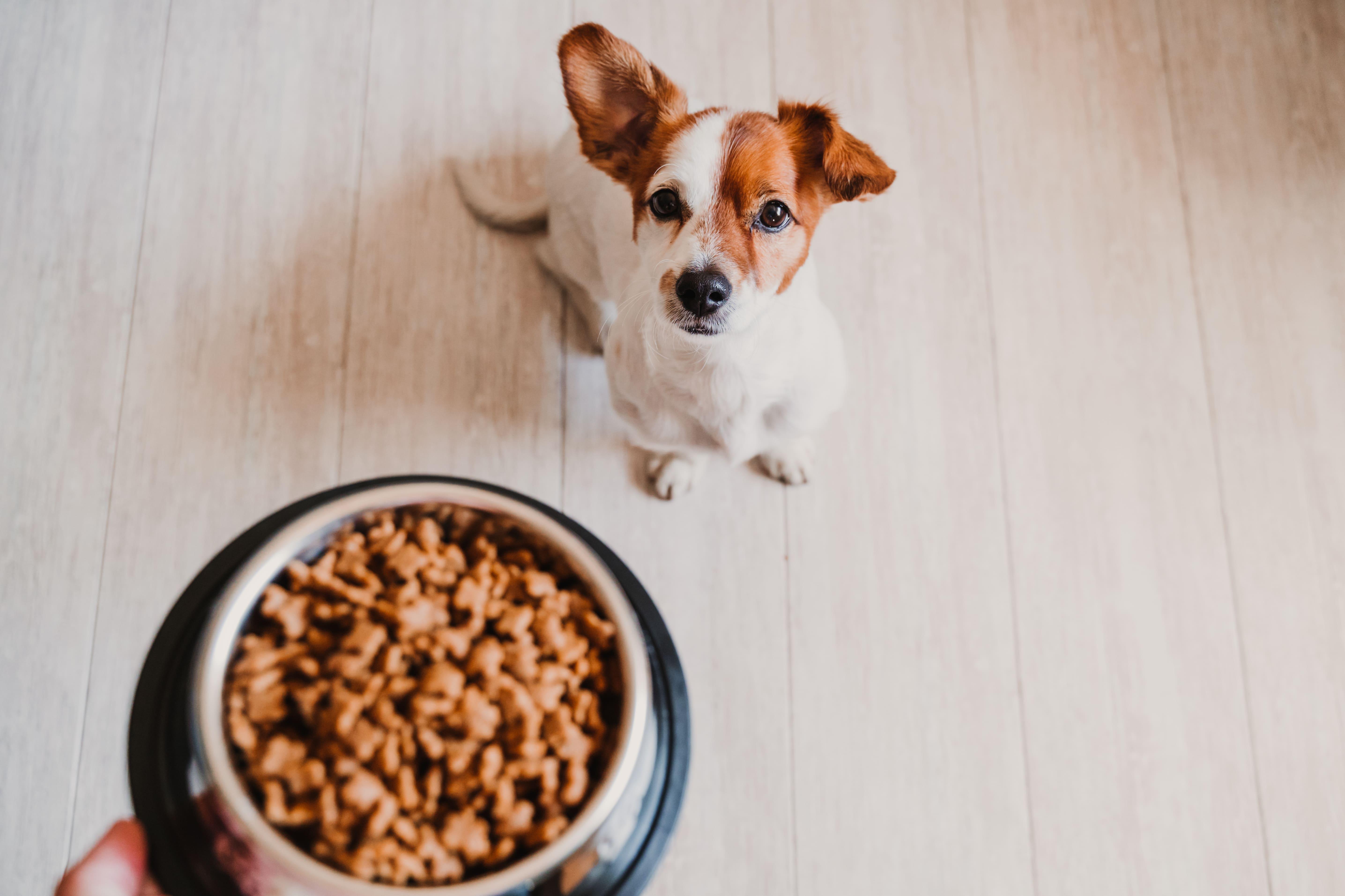 Comment accompagner mon animal dans son changement d'alimentation ?